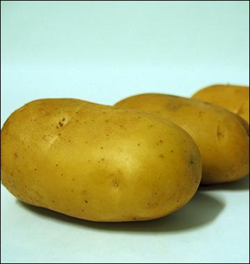 patate primura